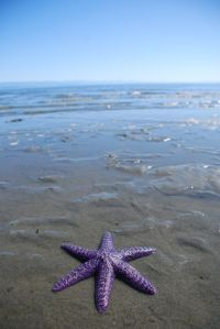 This is the only 6 legged starfish I have seen. A problem or a blessing?