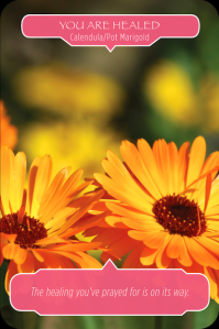Calendula_Pot_Marigold_You_Are_Healed