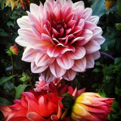 Blooming_Flowers