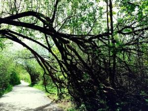 bent_trees