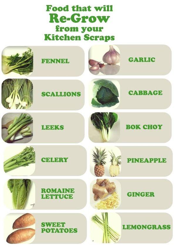 May   2014   Bloom Lisa Coaching Growing Vegetables From Scraps