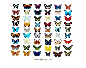 12A-butterfly_wallpaper
