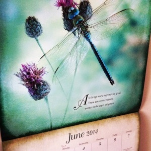 ACIM_June_Dragonfly
