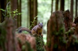 A Totem Animal Forest Series, Part One – Mr. Squirrel