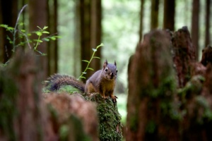 This little guy was a permanent guest at our campsite. I am feeling inspired to blog about the squirrel in August.
