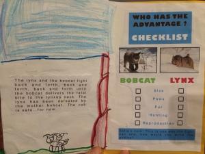 checklist_bobcatLynx