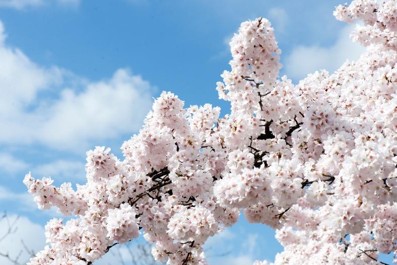 blog_large_bloom